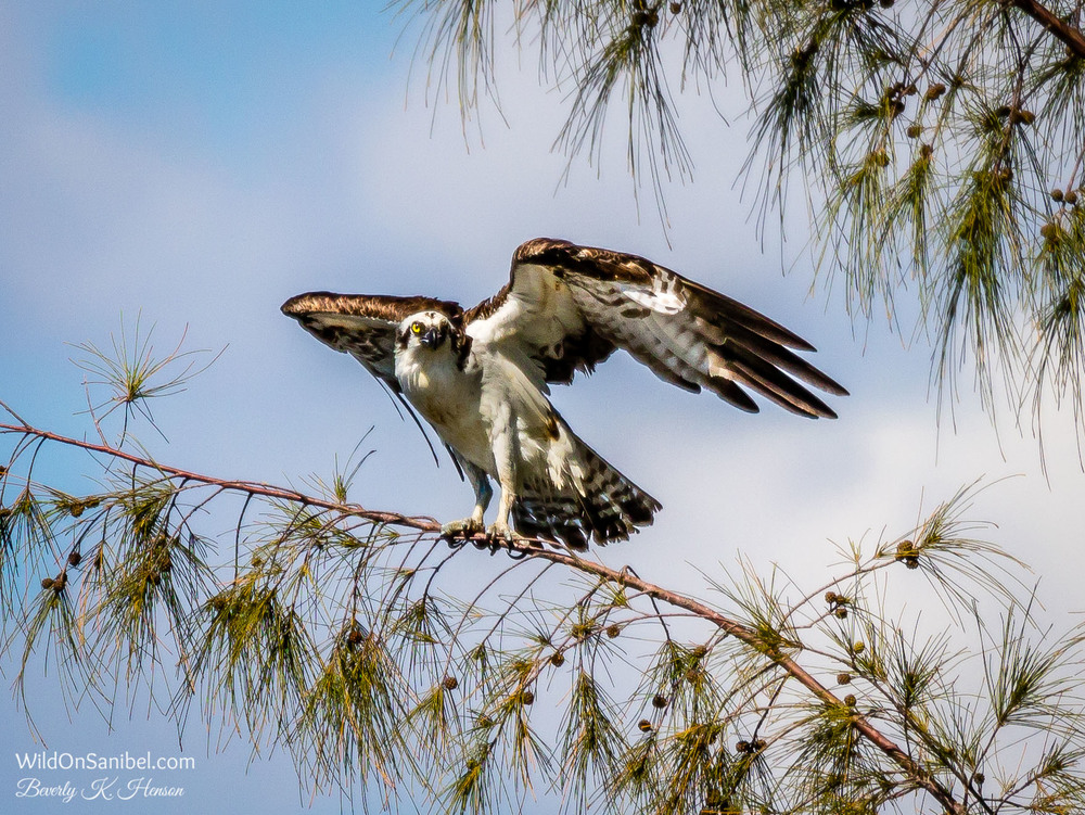 Yep, still watching!