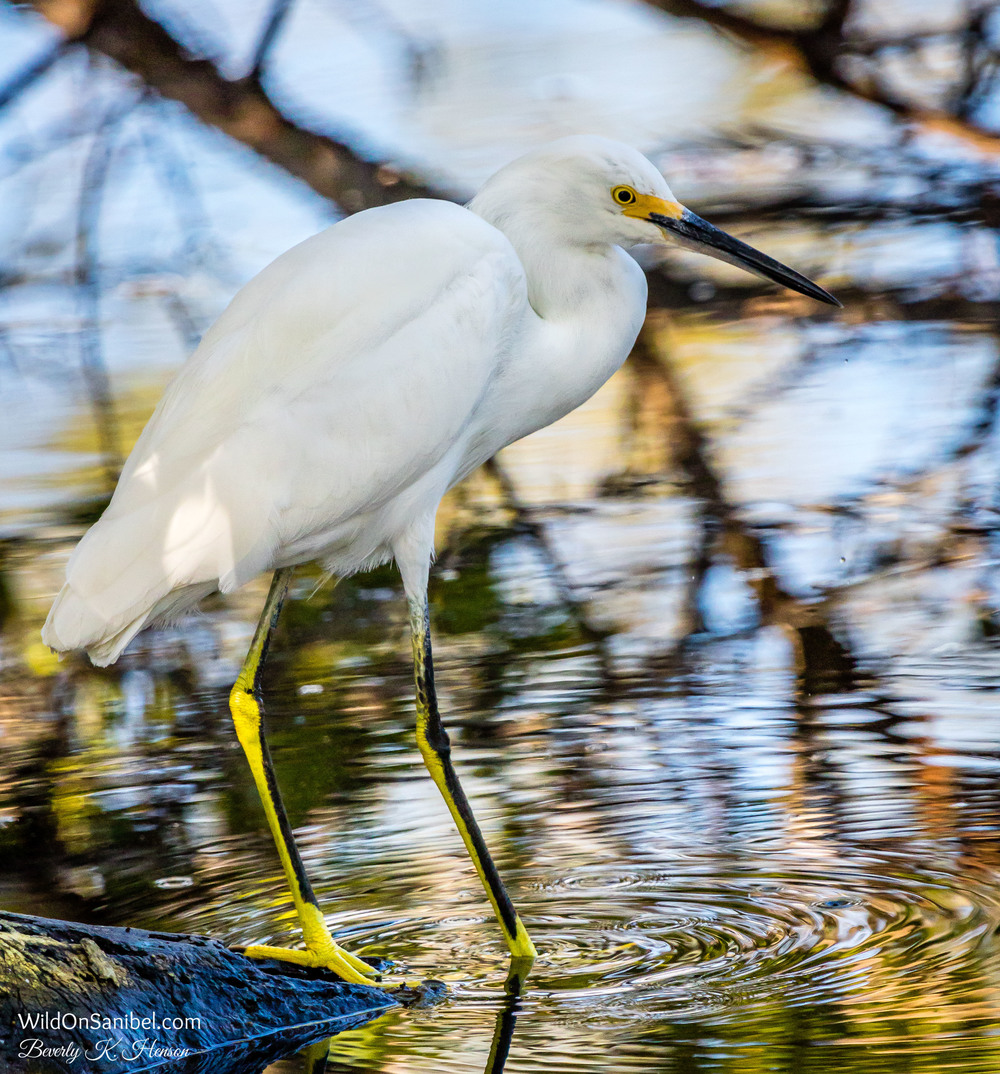 You put your right foot in . . . and do the hokey pokey!