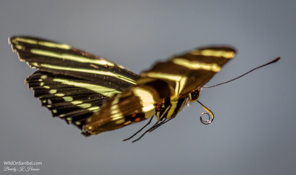 On to the next bloom!