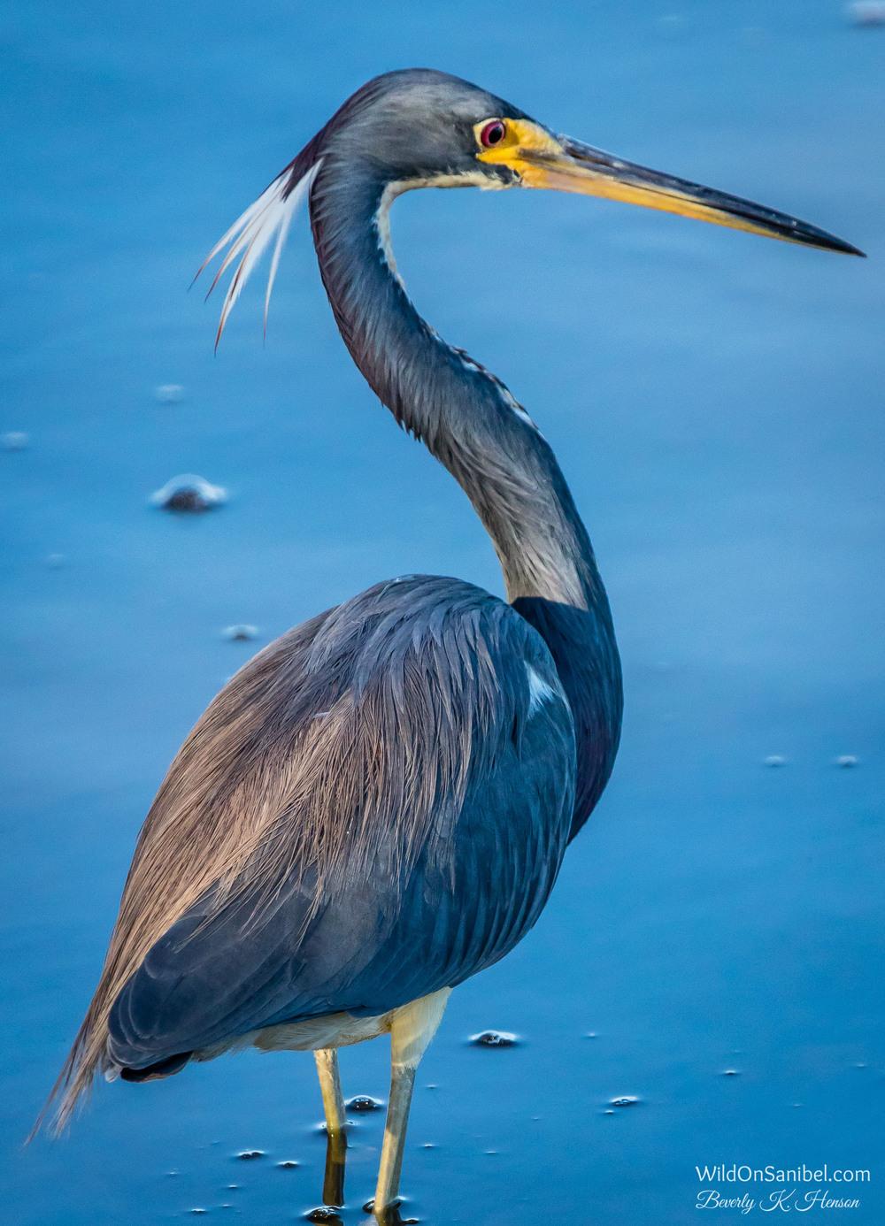 Such a beautiful bird!