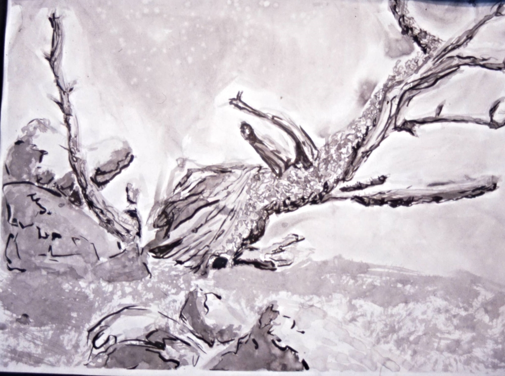 """untitled"" bristlecone pine study"