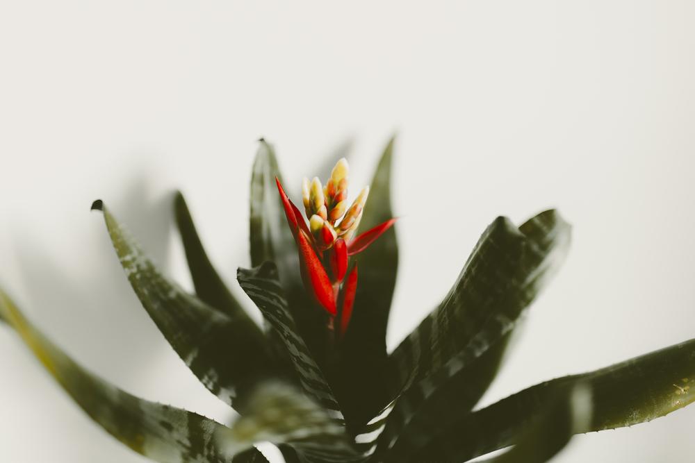 bromeliad-kmp-03.jpg
