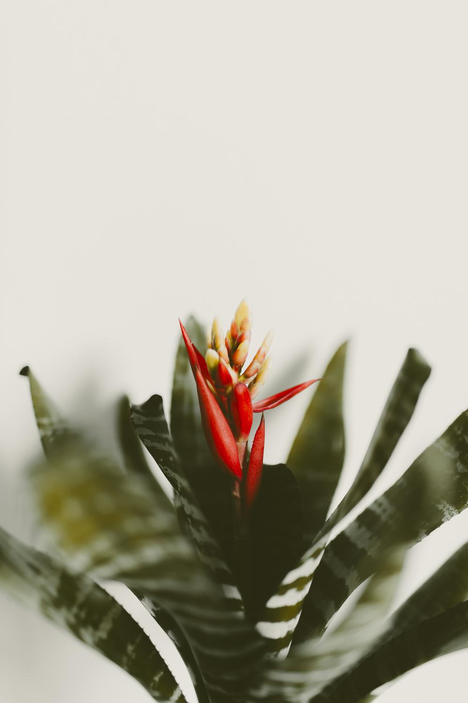 bromeliad-kmp-04.jpg