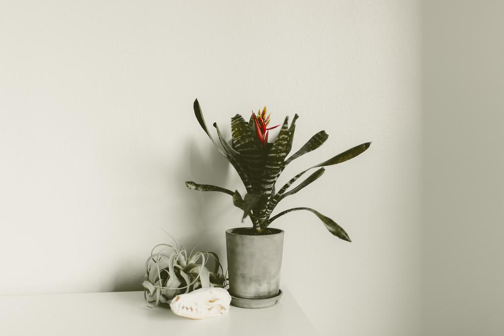 bromeliad-kmp-06.jpg