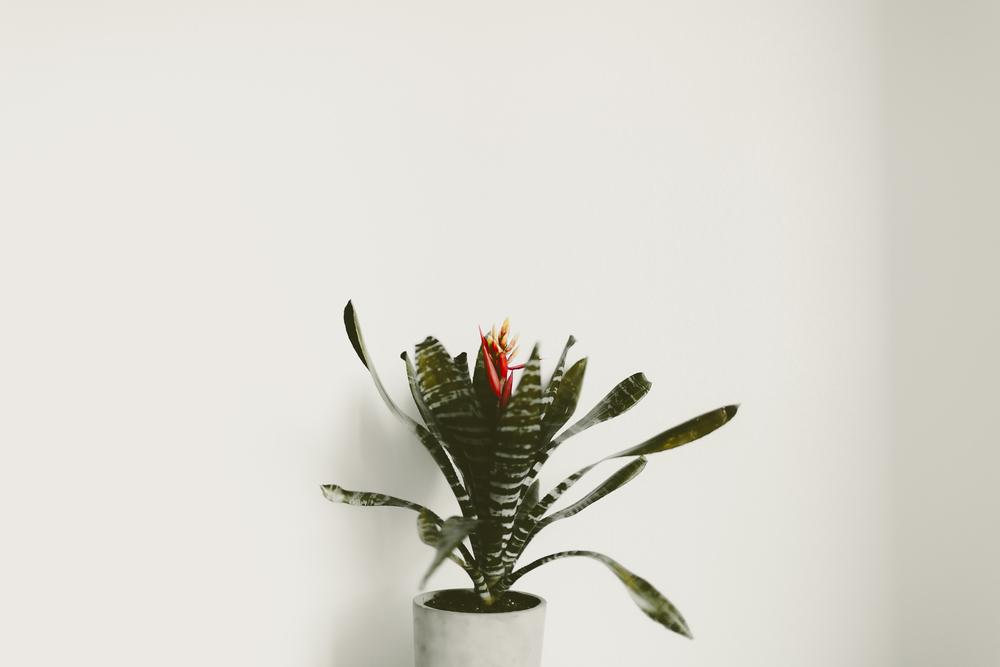 bromeliad-kmp-02.jpg