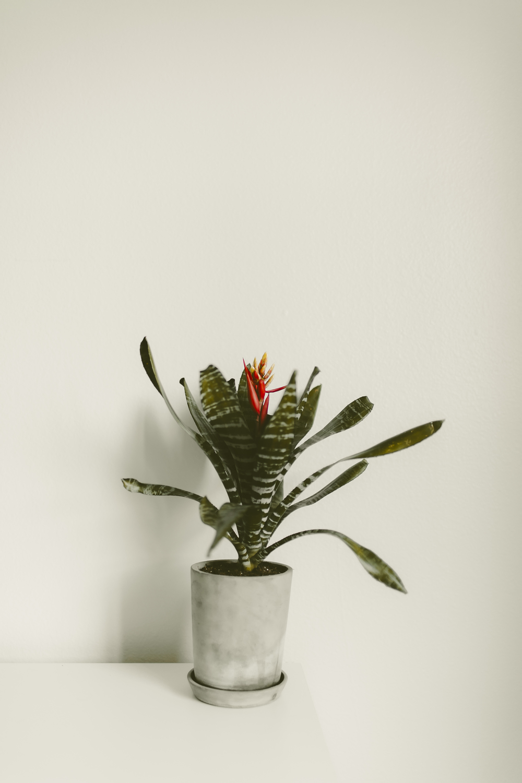 bromeliad-kmp-07.jpg