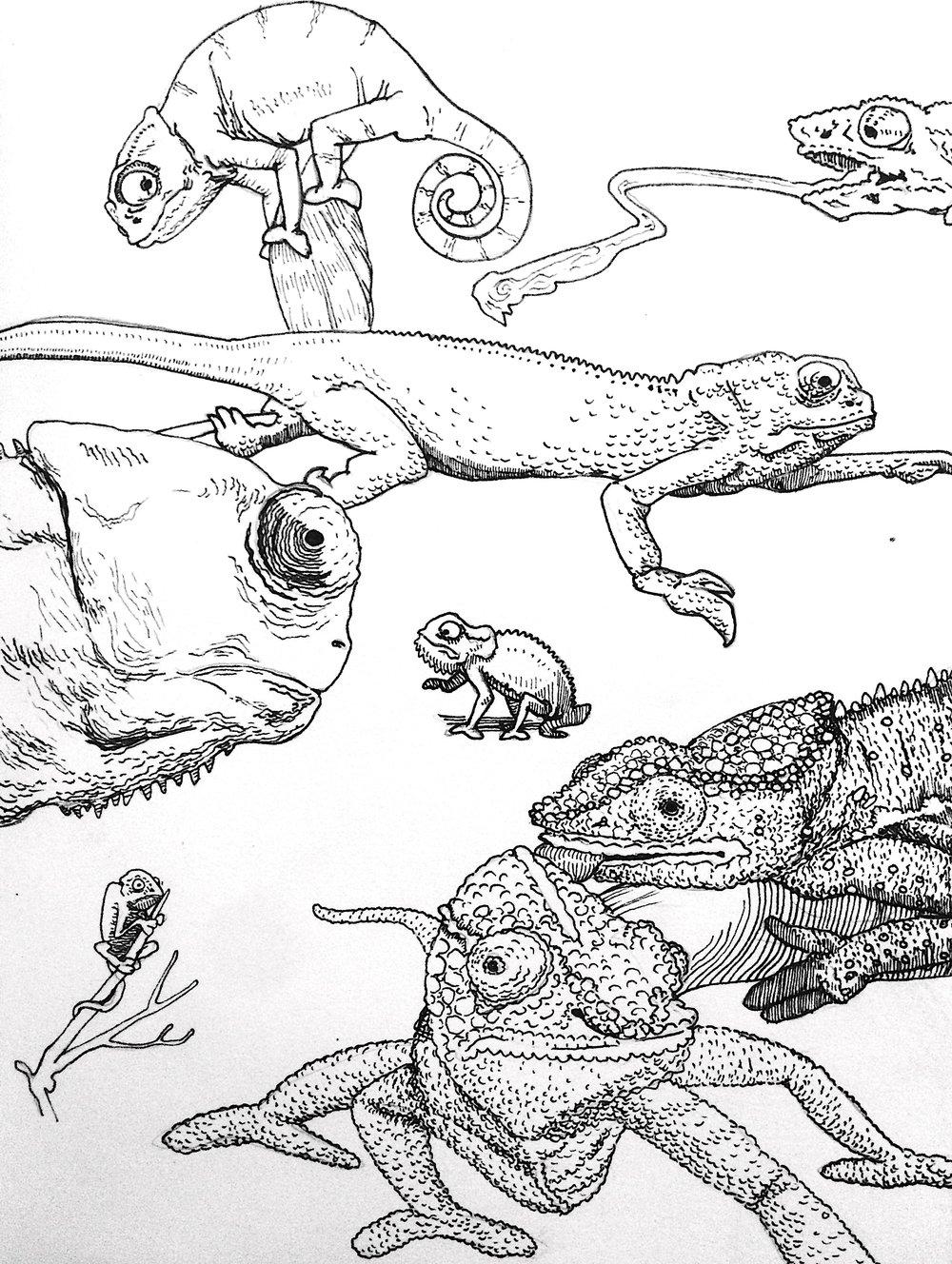 Chameleons Study.jpg