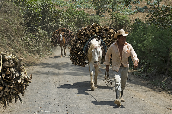 Guatemala Working Animals
