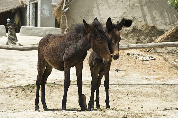 Care for a Foal