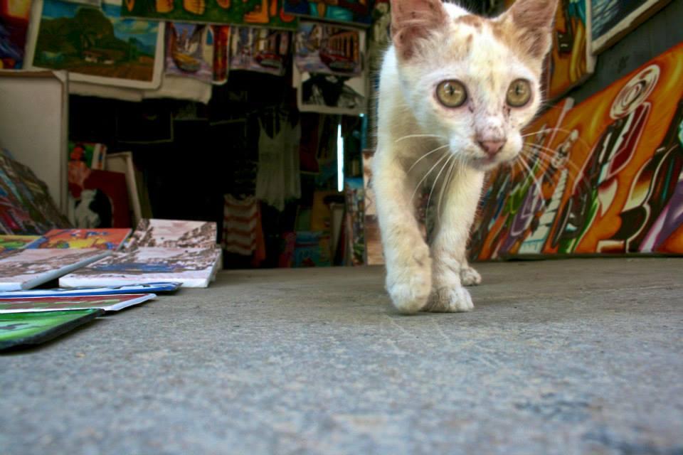 Art gallery kitty
