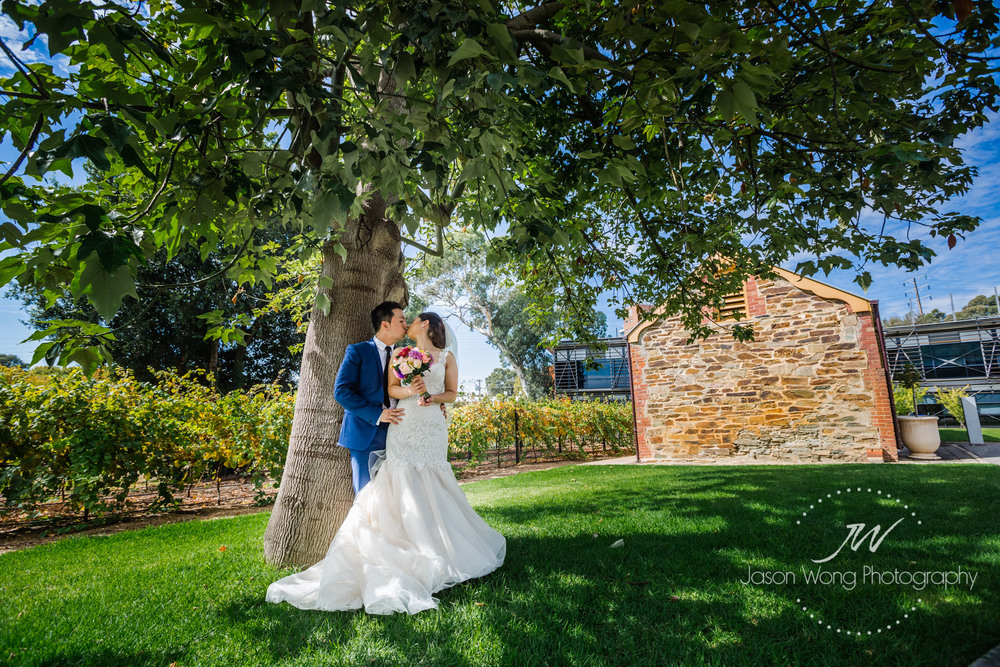 a-kiss-under-a-tree-national-wine-centre-adelaide.jpg