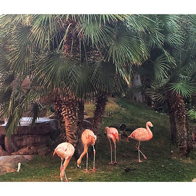Flamingos on Christmas Eve. Merry Christmas y'all! 🎄