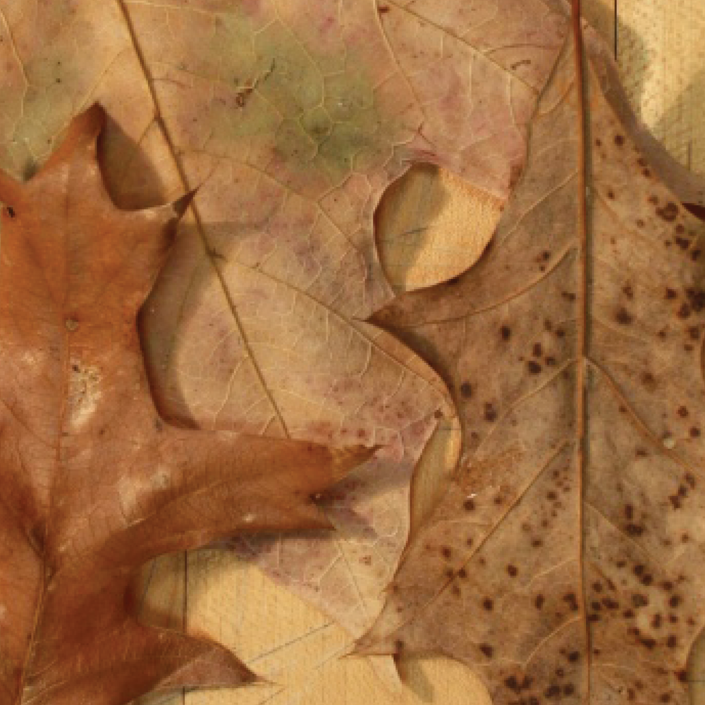 leaves3.png