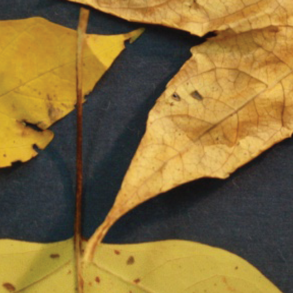 leaves6.png