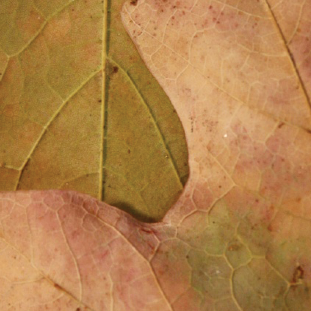 leaves9.png