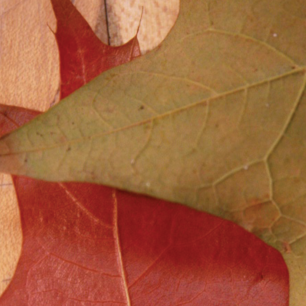 leaves10.png