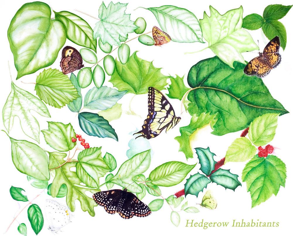 Hedgerow Inhabitants