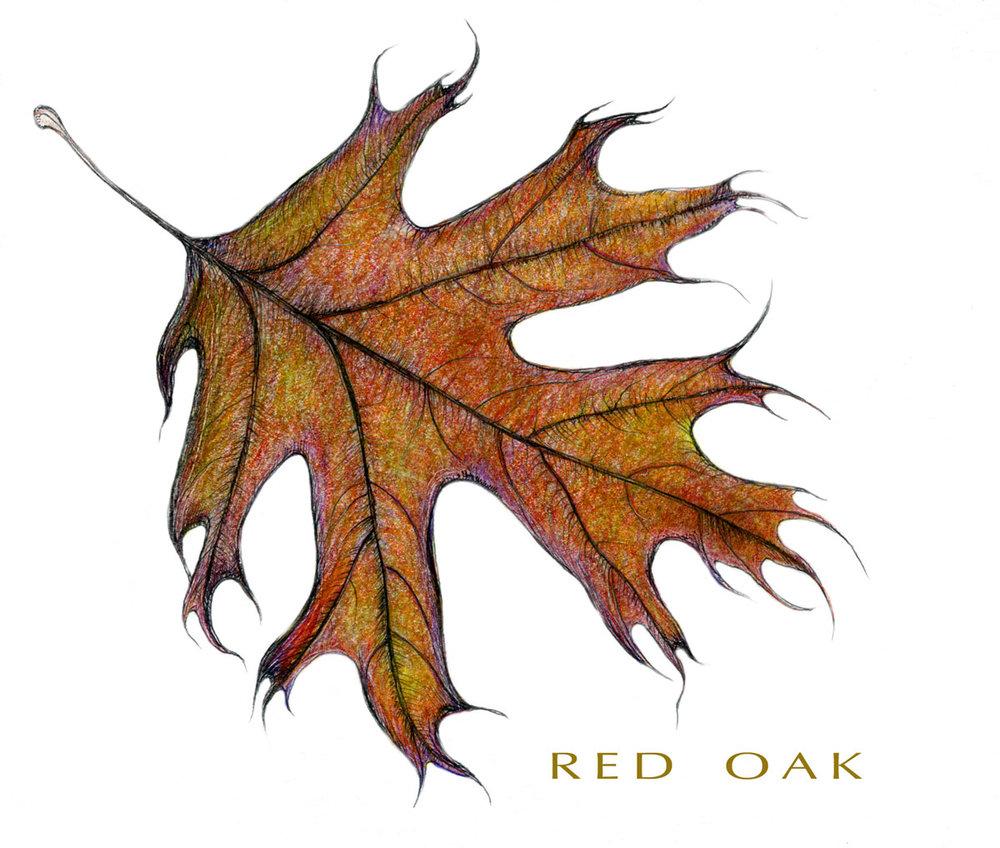 Red Oak Leaf Color