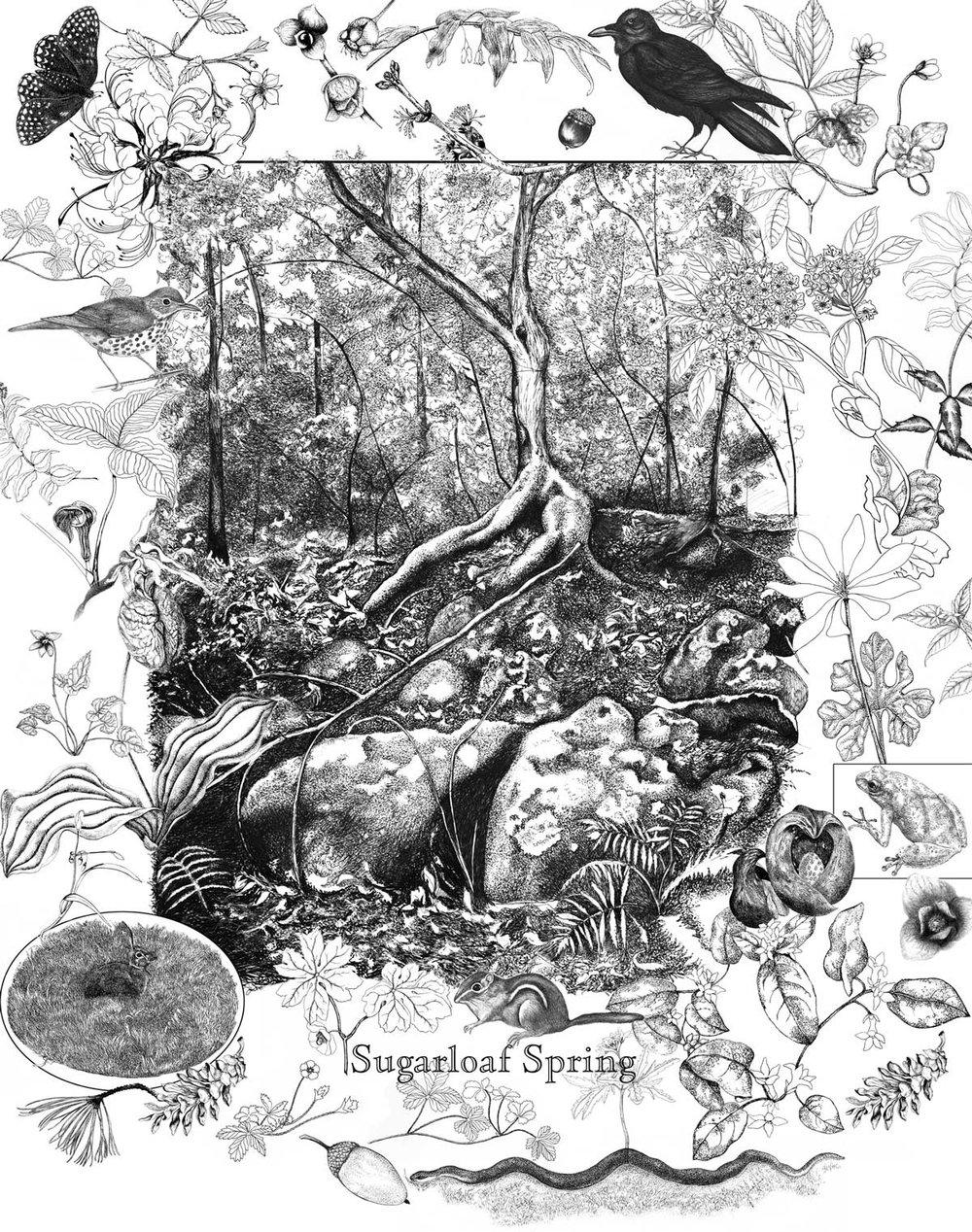 Sugarloaf Spring Poster