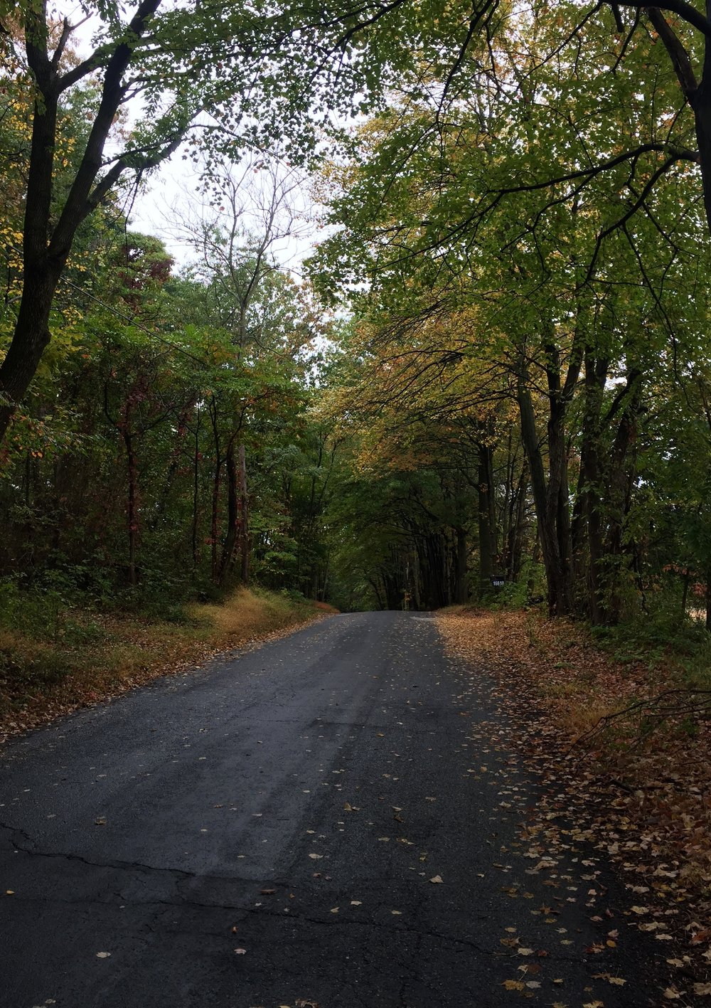 Fall Bike ride on West Old Baltimore Road