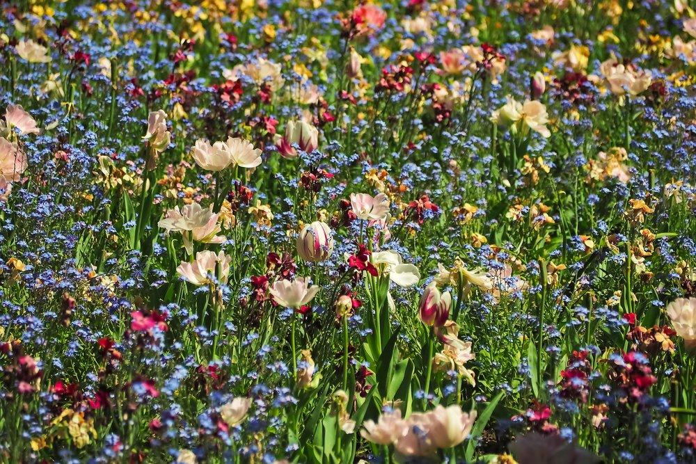 flowers-3383031_1920.jpg