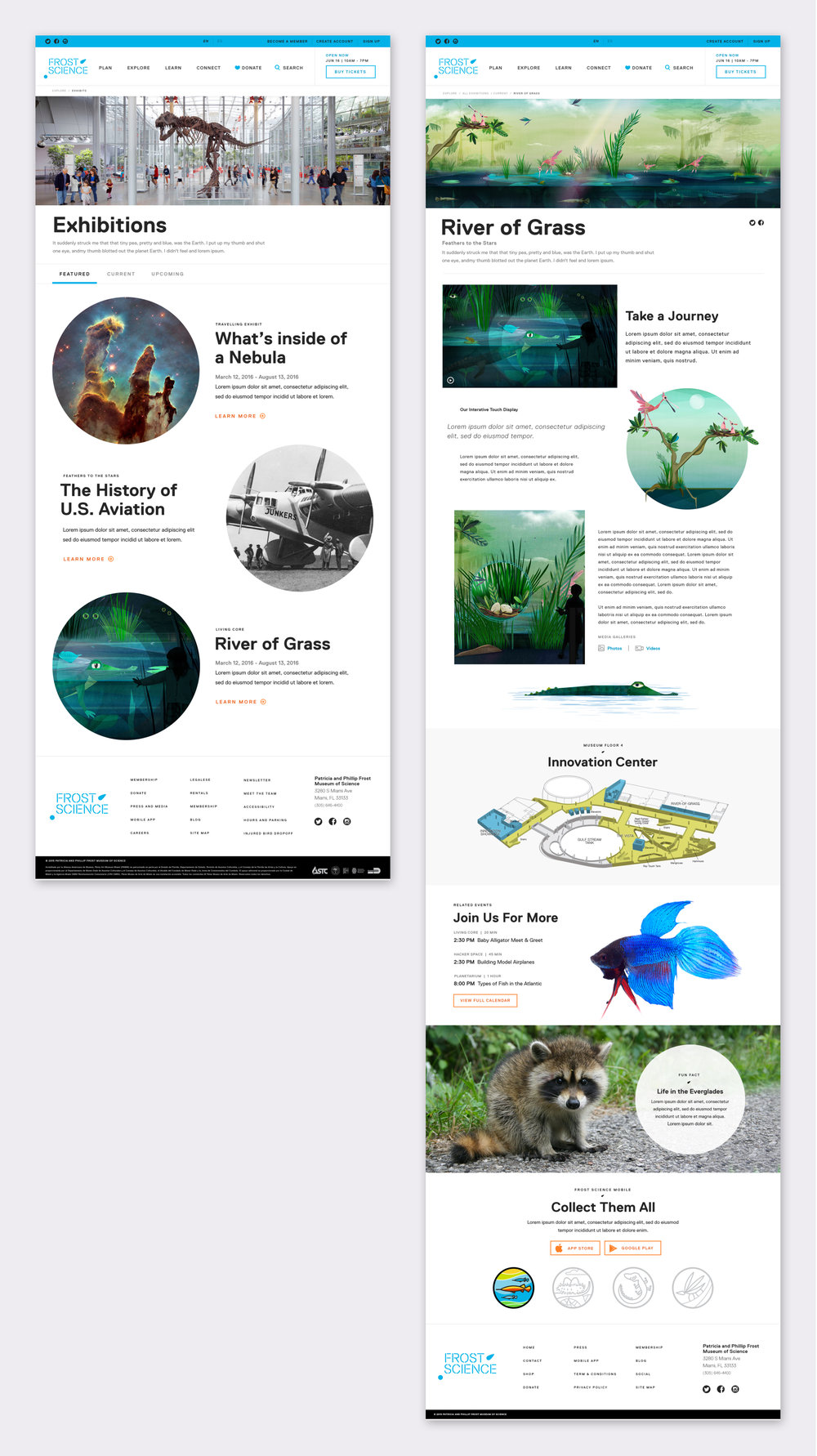 Web Images.jpg