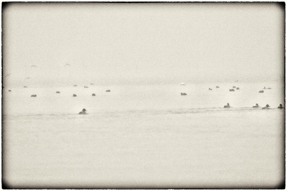 Waterfowl-04.jpg