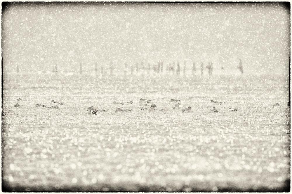 Waterfowl-06.jpg