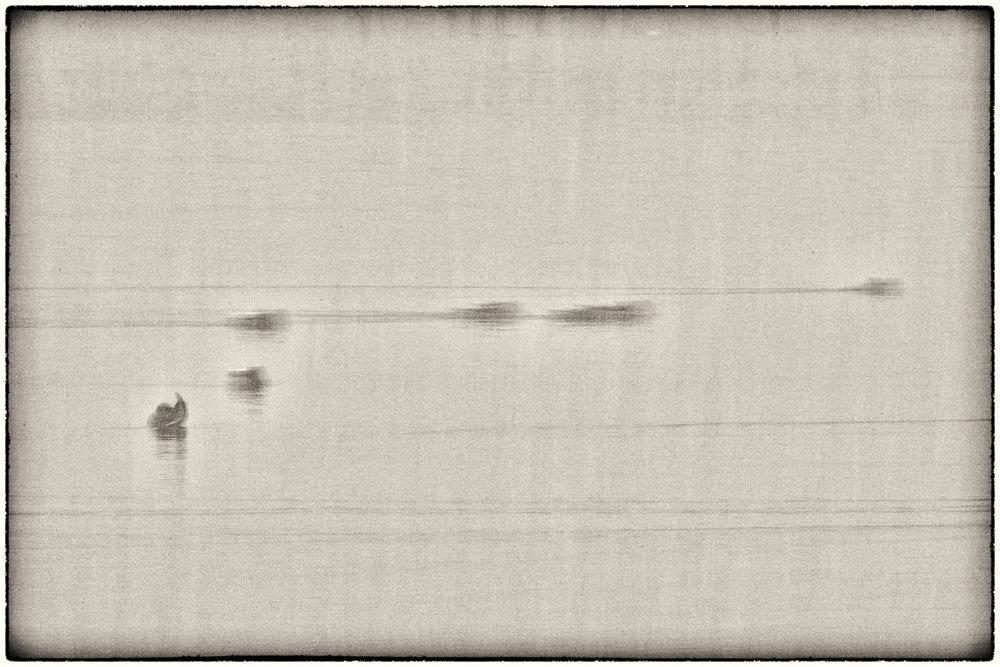 Waterfowl-08.jpg