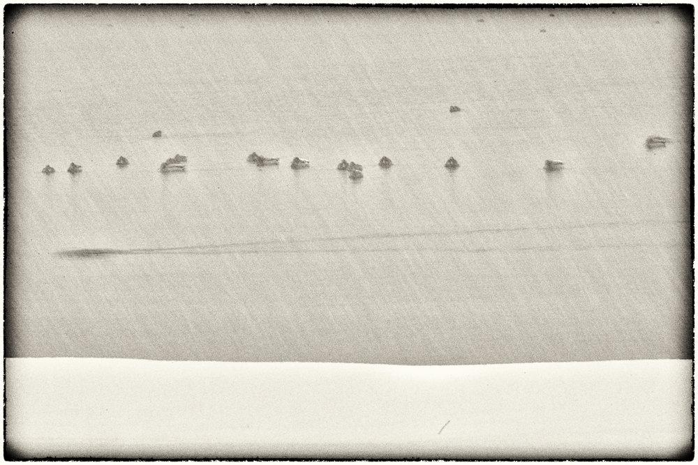 Waterfowl-07.jpg