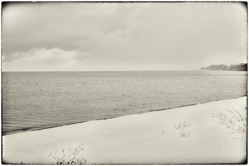 Waterfowl-11.jpg
