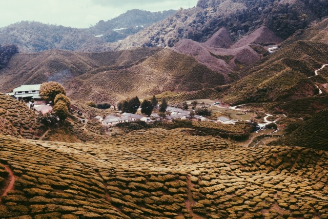 Pretty stoked that this photo I took at Cameron Highlands got featured on the VSCO GRID. Getting there.