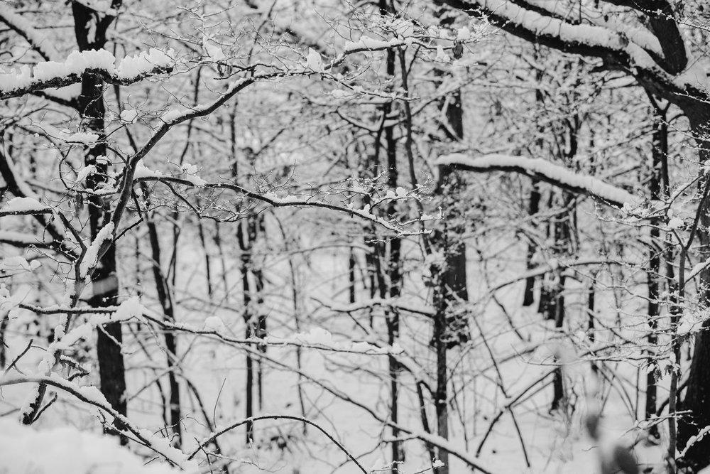 Winter snowfall in Worcestershire-18.jpg