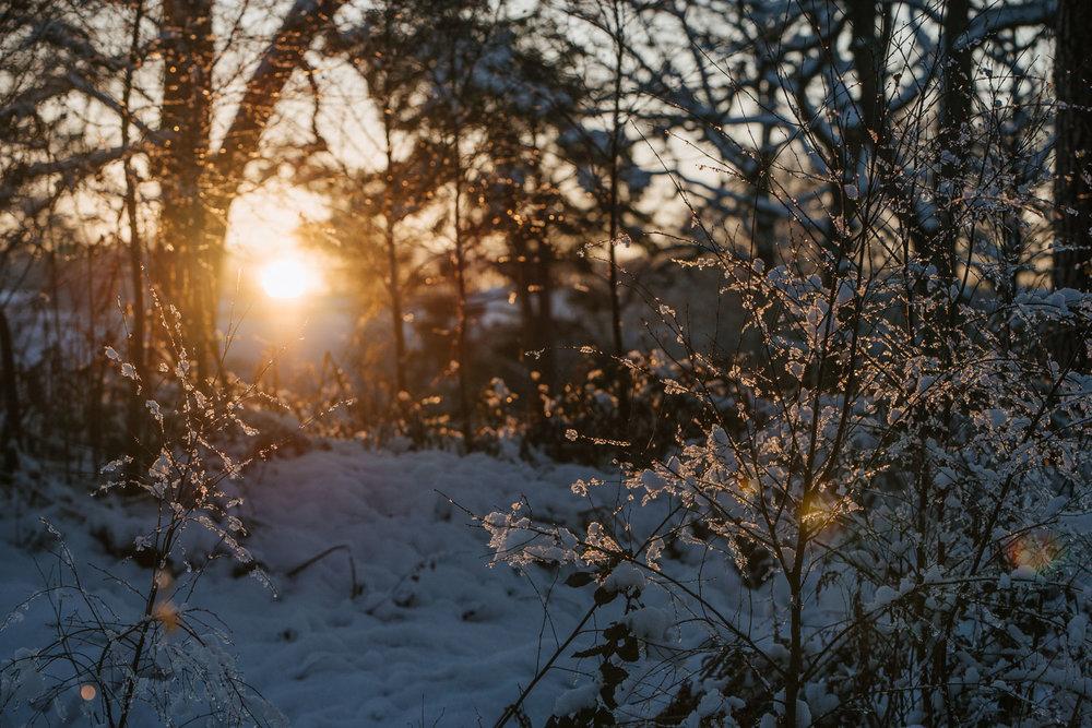 Winter snowfall in Worcestershire-14.jpg