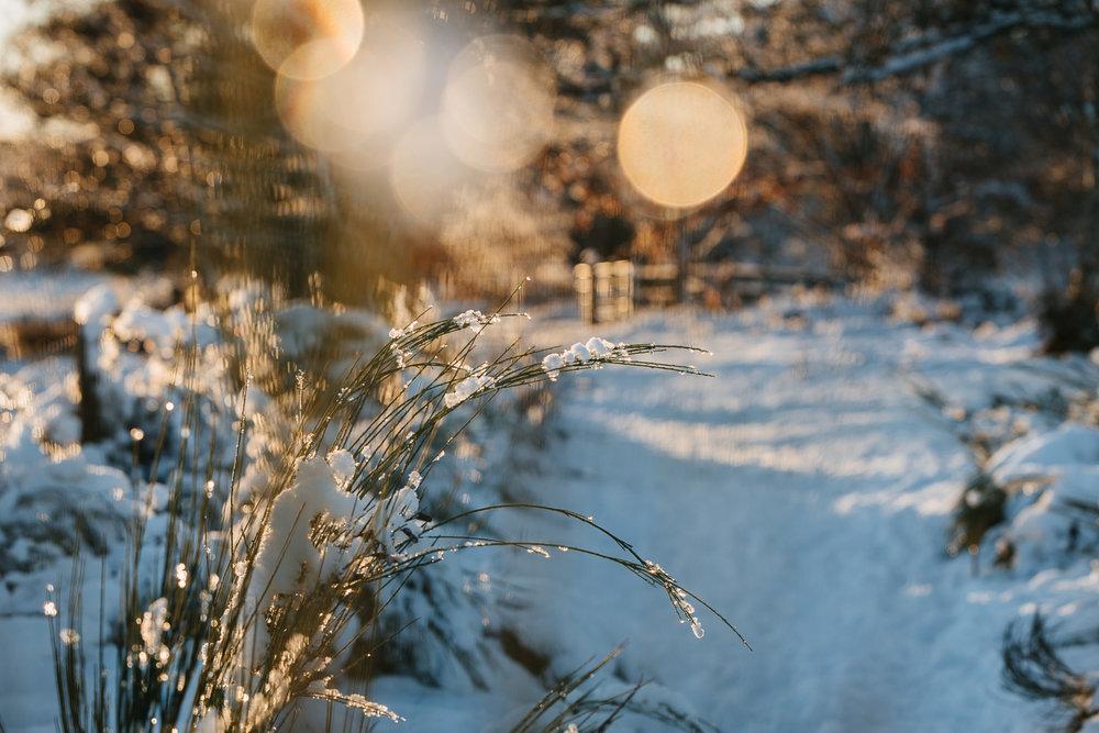 Winter snowfall in Worcestershire-11.jpg