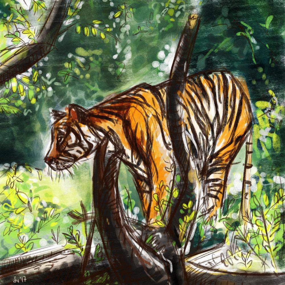 71_Tiger.jpg