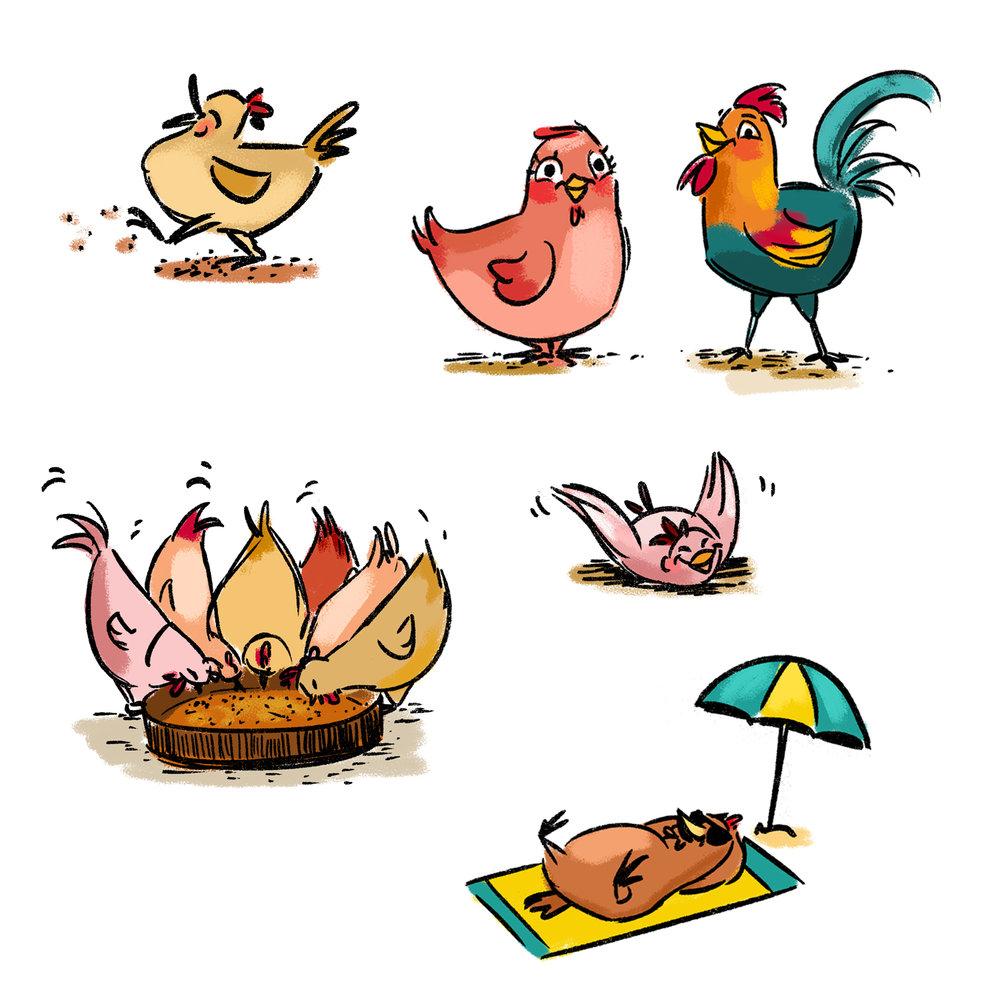 262_chicken2.jpg