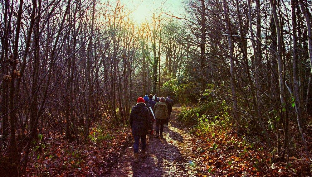 walk in the woods.jpg