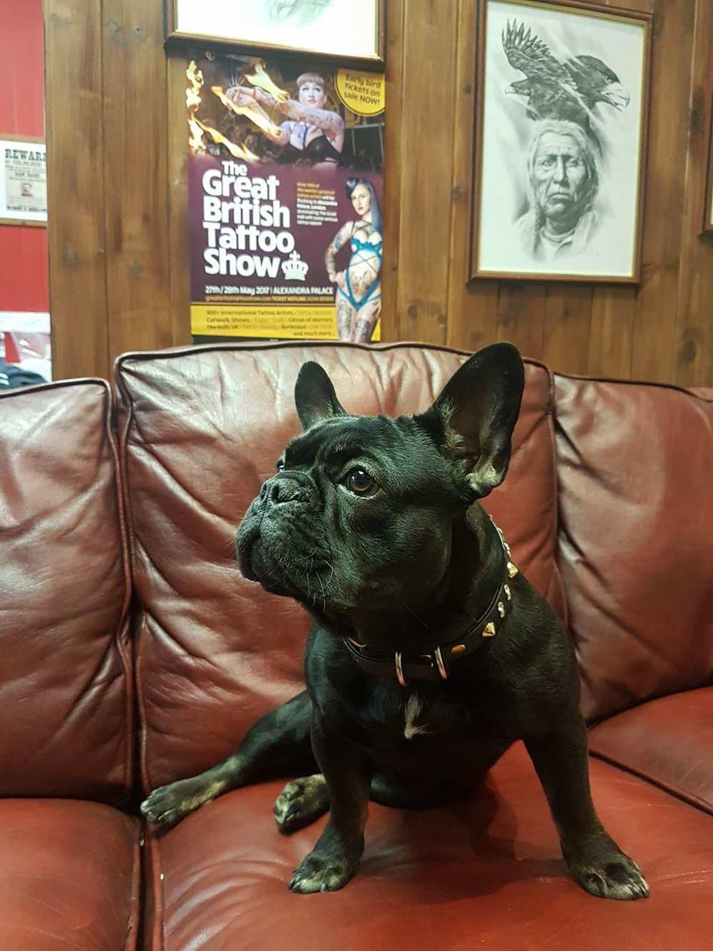 Smoking Guns Tattoo & Piercing Studio (ft. Ham the Frenchie)