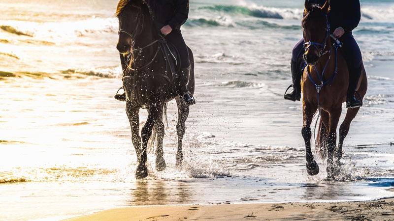 equestrian-holidays.jpg