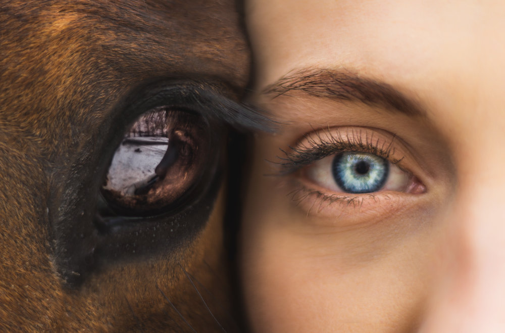 The 'equine show room'… - at Kingsman we want you to see eye-to-eye with your next sport horse purchase.PAGE UNDER CONSTRUCTION