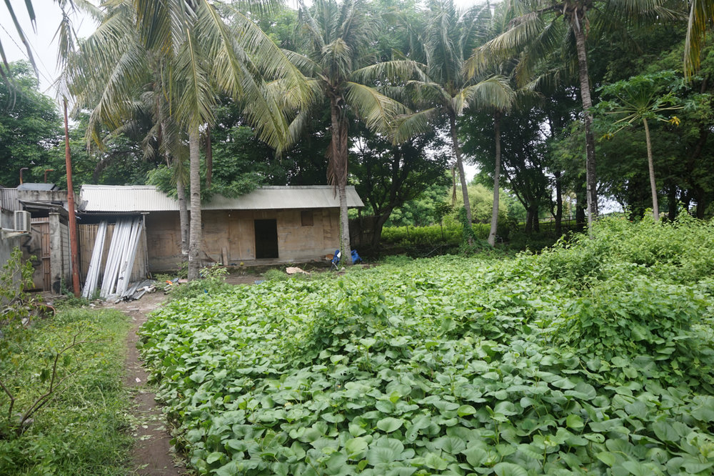 The living quarters surrounded by tropical forest.