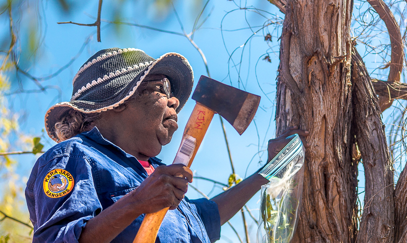 Karajarri Senior Ranger Jess angu collects samples for a biodiversity survey, near Bidyadanga community. Jess was one of the first female rangers in the Kimberley, and is leading the not only for her people, but Aboriginal women around Australia.