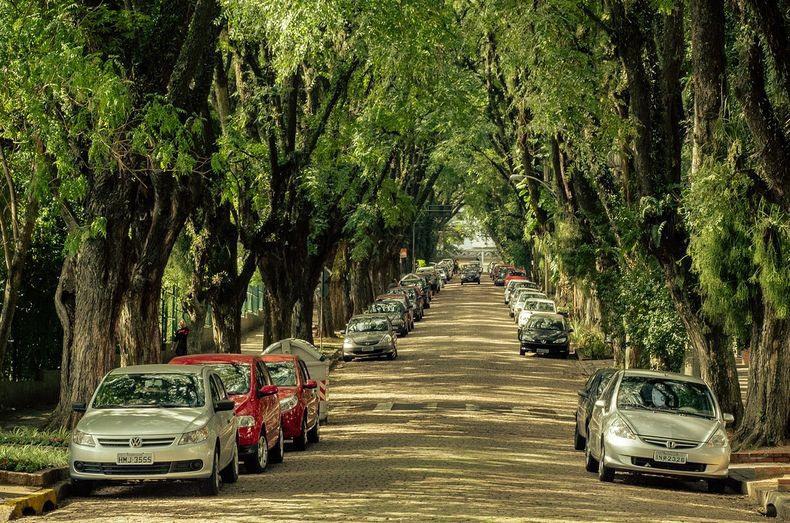 tree_street.jpg