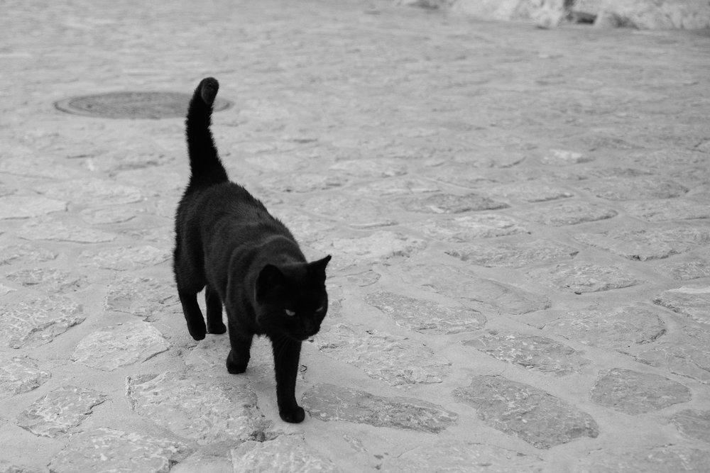"'Stray"" cats and dogs are EVERYWHERE in Greece however they are very well looked after by the inhabitants. Dogs are seen to be very respected animals so are often taken for injections and are fed and watered by residents. You wouldn't know they are strays! Some of them are so chunky from the amount people feed them!!!"