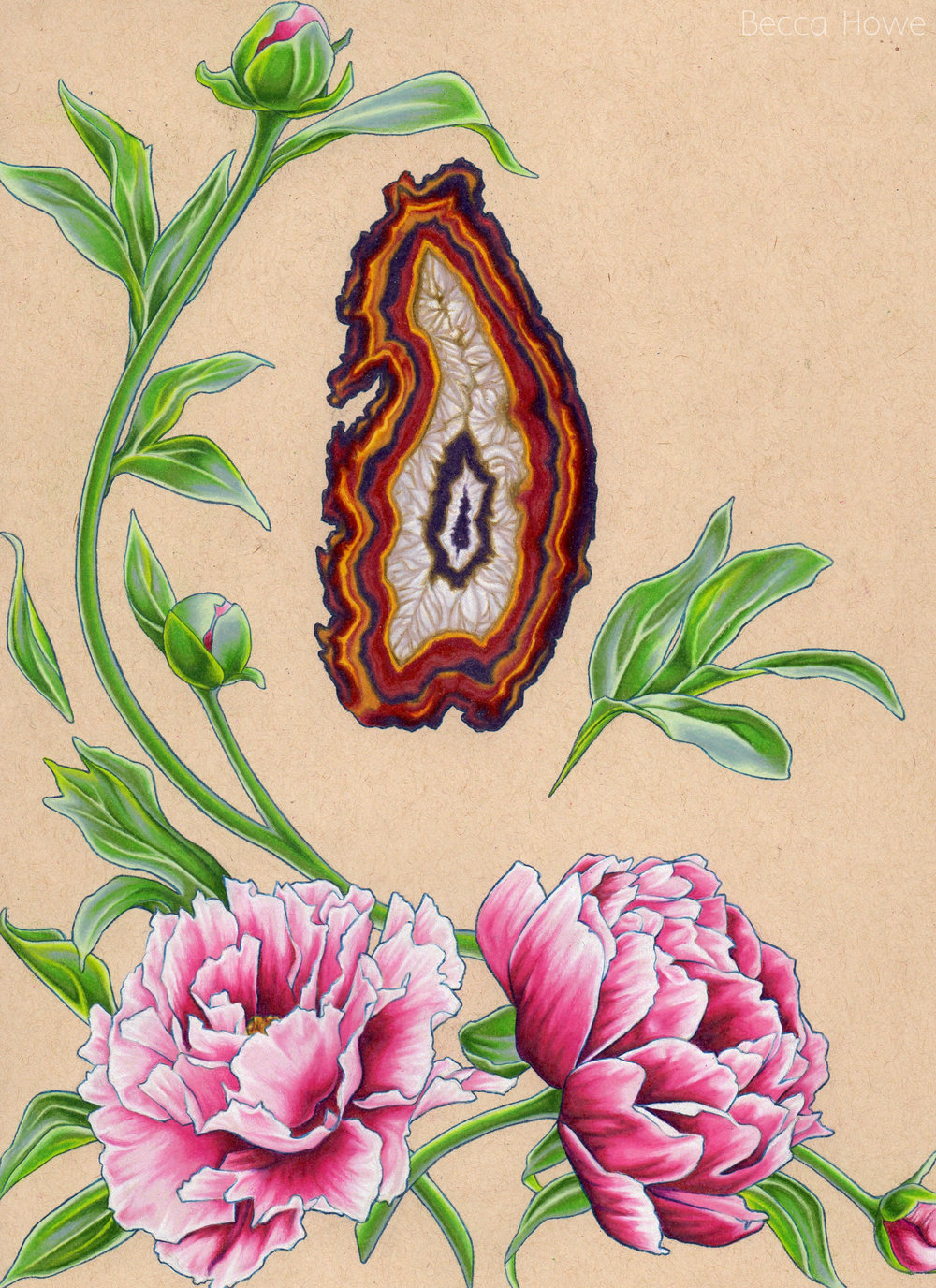 "Peony and Agate , Colored Pencil, 9"" x 12"", 2016"