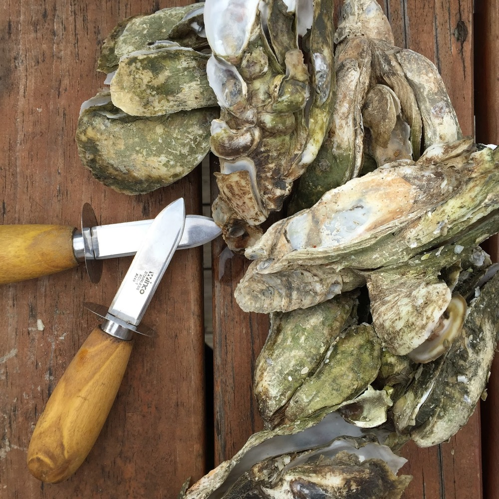 All Time Favorite Oyster Spots