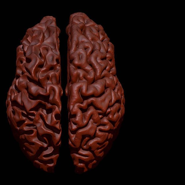 Progress on my Alzheimer's brain model. Read about it in my blog, link in profile! #zbrush #3dslicer #alzheimers #medicalart #designsculpt