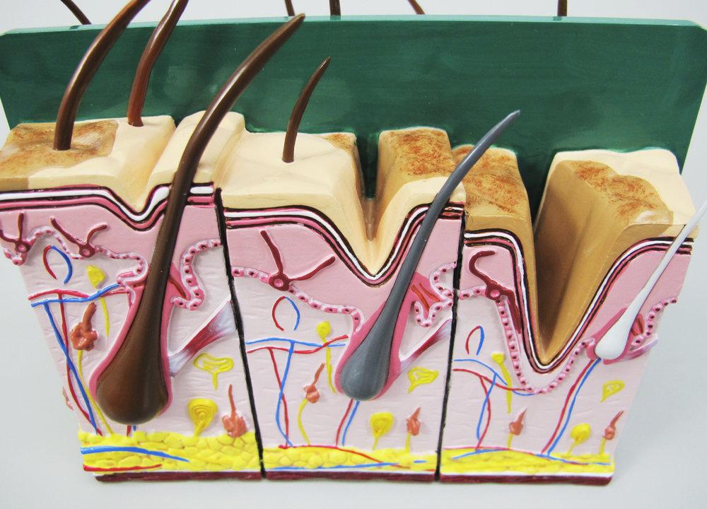 © 2015 GPI Anatomicals