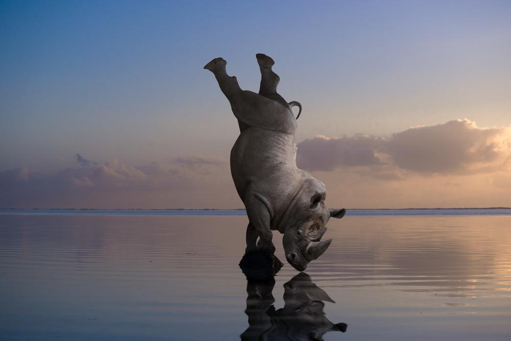 Rhino Thomas Subtil.jpg